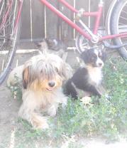 Semina und Stella