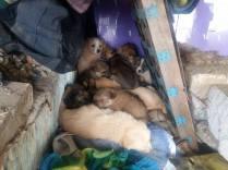 14 puppies 2 02:2016