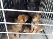 14 puppies 5 02:2016
