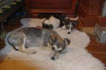 Coco und Vera im Haus