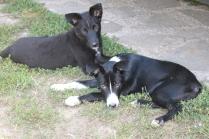 Jasper and Jay