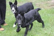 Jasper und Jay 3