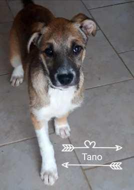 Tano 8