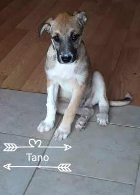 Tano 9
